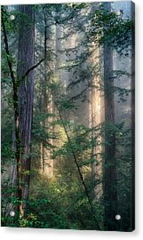 Redwood Network Acrylic Print