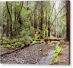 Redwood Creek Flowing Through Muir Woods National Monument - Mill Valley Marin County California Acrylic Print