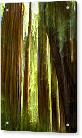 Redwood Dream Acrylic Print
