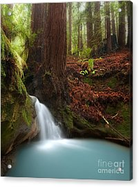 Redwood Forest Waterfall Acrylic Print