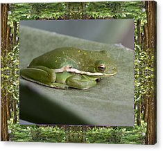 Acrylic Print featuring the photograph Redwood Frog by Bell And Todd