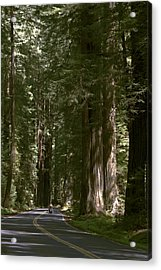 Redwood Highway Acrylic Print