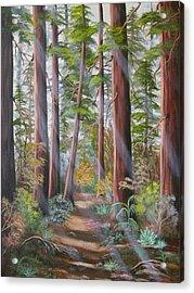 Redwood Path Acrylic Print