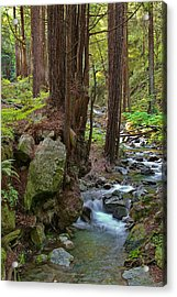 Redwood Stream Acrylic Print by Arthurpete Ellison