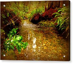 Redwood Stream Reflections Acrylic Print