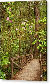 Redwood Trail  In The Spring Acrylic Print by Andrew Soundarajan