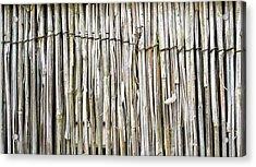 Reed Background Acrylic Print by Tom Gowanlock