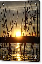 Reeds In A Lake Acrylic Print by Chad Natti