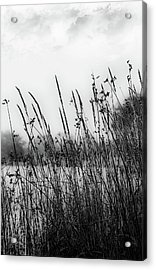 Reeds Of Black Acrylic Print