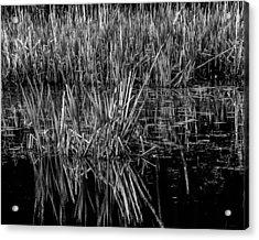 Reeds Reflection  Acrylic Print