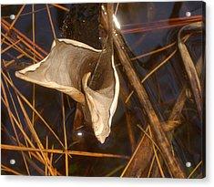Reeds Acrylic Print by Steve Ellis