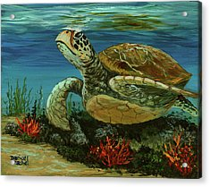 Acrylic Print featuring the painting Reef Honu by Darice Machel McGuire