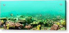 Reef Life Acrylic Print by Owen Caddy