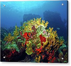 Reef Scene With Divers Bubbles Acrylic Print