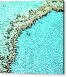 Reef Textures Acrylic Print