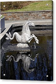 Reflections On A Sea Horse Acrylic Print