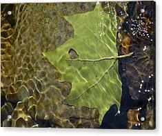Reflected Indignation Acrylic Print