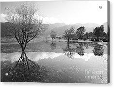 Reflected Trees Acrylic Print by Gaspar Avila