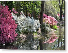 Reflecting Azaleas Acrylic Print