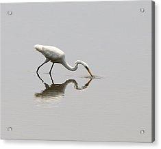 Reflecting Egret Acrylic Print by Al Powell Photography USA