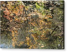 Reflecting Gold Acrylic Print by Linda Geiger