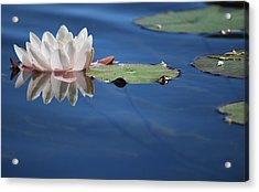 Acrylic Print featuring the photograph Reflecting In Blue Water by Amee Cave