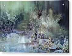 Reflecting On A Misty Morning Acrylic Print