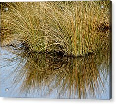 Reflecting Reeds Acrylic Print by Marty Koch