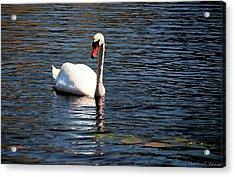 Reflecting Swan Acrylic Print