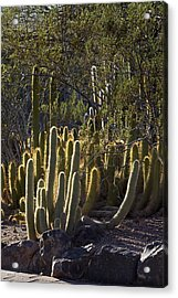 Acrylic Print featuring the photograph Reflecting The Sunshine by Phyllis Denton