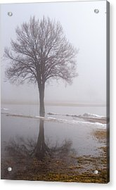 Reflecting Tree Acrylic Print