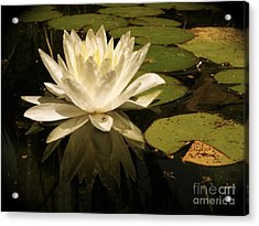 Reflection Acrylic Print by Amy Strong