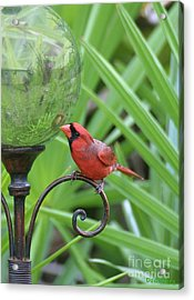 Acrylic Print featuring the photograph Reflection by Dodie Ulery
