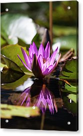 Acrylic Print featuring the photograph Reflection In Fuchsia by Suzanne Gaff
