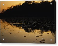 Reflection In The Water At Everglades Acrylic Print by Stacy Gold