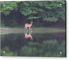 Reflection Acrylic Print by Jeffrey Koss