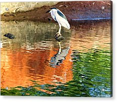 Reflection Of A Bird Acrylic Print by Kathy Tarochione