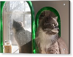 Reflection Of A Cat Acrylic Print by David Bishop