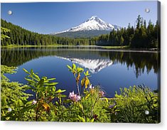 Reflection Of Mount Hood In Trillium Acrylic Print by Craig Tuttle
