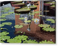 Reflections II Acrylic Print by Suzanne Gaff