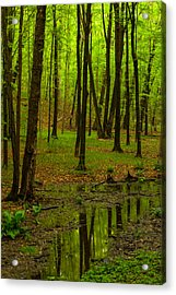 Reflections In The Woods Acrylic Print by Karol Livote
