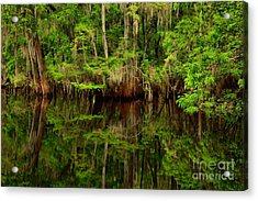 Reflections Near The Suwannee River Acrylic Print by Adam Jewell