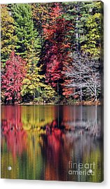 Reflections Of A Bare Tree Acrylic Print