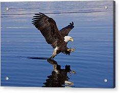 Reflections Of Eagle Acrylic Print