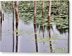 Reflections Of Franklin Parker Acrylic Print