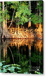 Reflections Of Our Roots Acrylic Print by Lora Wood