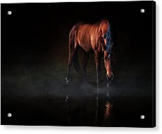 Reflections Of Wilma Acrylic Print by Debby Herold