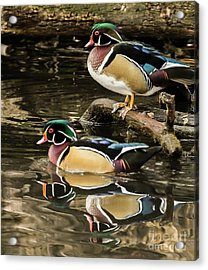 Reflections Of You And Me Wildlife Art By Kaylyn Franks Acrylic Print