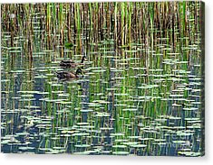 Reflections On Duck Pond Acrylic Print by Sharon Talson