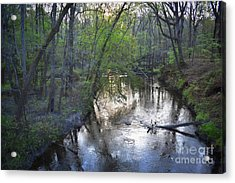 Acrylic Print featuring the photograph Reflections On The Congaree Creek by Skip Willits